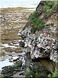 NU2231 : Kittiwake colony on the cliffs above Braidcarr Rocks by Oliver Dixon