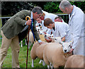 SO6286 : Judging the sheep at the Burwarton Show by Dave Croker