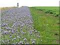 NO5101 : Edge of the potato field by M J Richardson