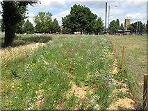 TQ1372 : Planting of wild flowers by David Hawgood