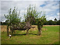 SX4168 : Willow sculpture in the Mother Orchard at Cothele by Rod Allday