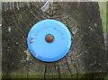 ST5463 : Plastic survey mark disc by Neil Owen