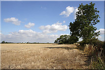 SK7528 : Field of stubble near Mount Pleasant by Kate Jewell
