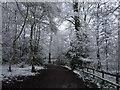 TQ0083 : Black Park in the snow by John Chisholm