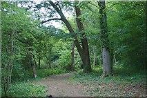 TQ2157 : Hack ride through Warren Woods by Hugh Craddock