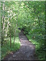 NY8362 : Track between Langley Castle and Elrington (2) by Mike Quinn