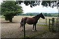 TQ0521 : On the footpath near Stablebarn Farm by Graham Horn