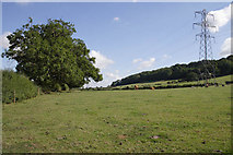 SK7528 : Pasture in the Vale of Belvoir by Kate Jewell