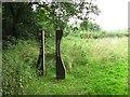 SJ5369 : Old Pale Woodland by Richard Webb