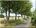 ST6262 : 2010 : Sycamores on Birchwood Lane by Maurice Pullin