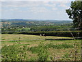 ST5554 : View from Smitham Hill by Sarah Charlesworth