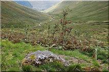 NT1413 : Trees on the hillside, Carrifran by Jim Barton