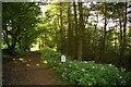 SJ9791 : Path entering Etherow Country Park by Bill Boaden