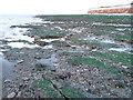 TF6641 : A green beach by Richard Humphrey
