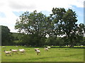 NY8262 : Pastures and woodland west of Castle Farm by Mike Quinn