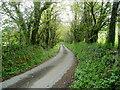 SX2862 : Lane to Menheniot by Jonathan Billinger