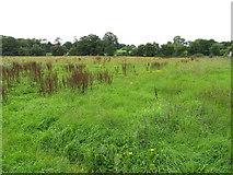 R5353 : Rough pasture near Mungret by David Hawgood
