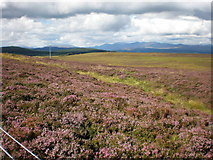 NH5639 : Moorland near Ladycairn by Sarah McGuire