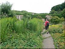 SS8872 : Inside Dunraven's walled garden by Eirian Evans