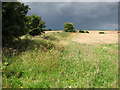 TF9227 : A stormy sky over ripening crops at Pudding Norton by Evelyn Simak