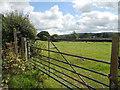 SO4678 : Field between lane & railway by Row17