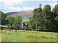 NY6949 : Maiden Way south of Dyke House by Mike Quinn
