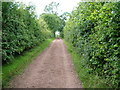 NY7813 : Bridleway near Brough by David Brown