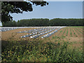 TF4401 : Vegetable field by Coldham Bank by Hugh Venables