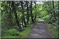 SS8532 : Exmoor : Riverside Path by Lewis Clarke
