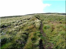 NT8722 : Pennine Way on the Schil by Oliver Dixon