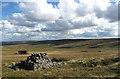 NY9534 : Grassy moorland in  upper Bollihope by Trevor Littlewood