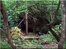 SK2579 : Above Padley Gorge by Jonathan Clitheroe