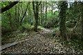 SS4938 : A fork in the footpath in Blackwell Woods by Roger A Smith
