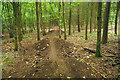 TQ3410 : Bike jumps, Millbank Wood by Robin Webster