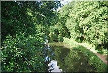 SU9946 : River Wey (Godalming Navigation) by N Chadwick