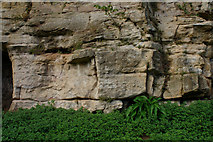 SE2768 : Cliff Face, Fountains Abbey by Mark Anderson