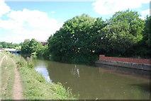 SU9946 : River Wey / Wey Navigation south of Broadford Bridge by N Chadwick