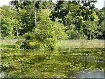 NS2209 : The Swan Pond, Culzean Country Park by Humphrey Bolton