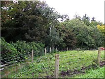 G9470 : Woodland area, Rath by Kenneth  Allen