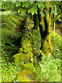 NS0122 : Moss-covered wall near Eas Mor Waterfall by Andy Beecroft