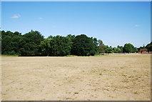 SU9948 : Shalford Park by N Chadwick