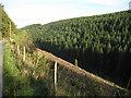 SO2587 : Cwm Ffrydd by Philip Halling
