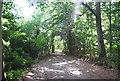 TQ0048 : North Downs Way (Pilgrims' Way), Chantry Wood by N Chadwick