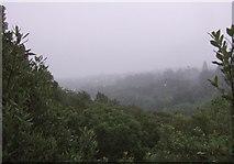 SX9065 : Cloudy day, Chapel Hill Woods by Derek Harper