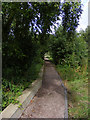 TG3304 : The Wherryman's Way near Rockland Short Dike by Glen Denny