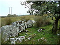 G8584 : Standing stones in Tullytrasna by louise price