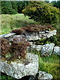 G7677 : Court tomb at Casheltown by louise price