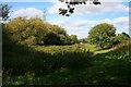 SZ0696 : Meadow near St Andrew's by David Lally
