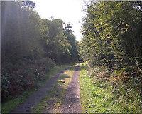 SS5289 : Woodland Walk by John Duckfield