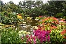 SJ7243 : Pond in Bridgemere Gardens by Steve Daniels